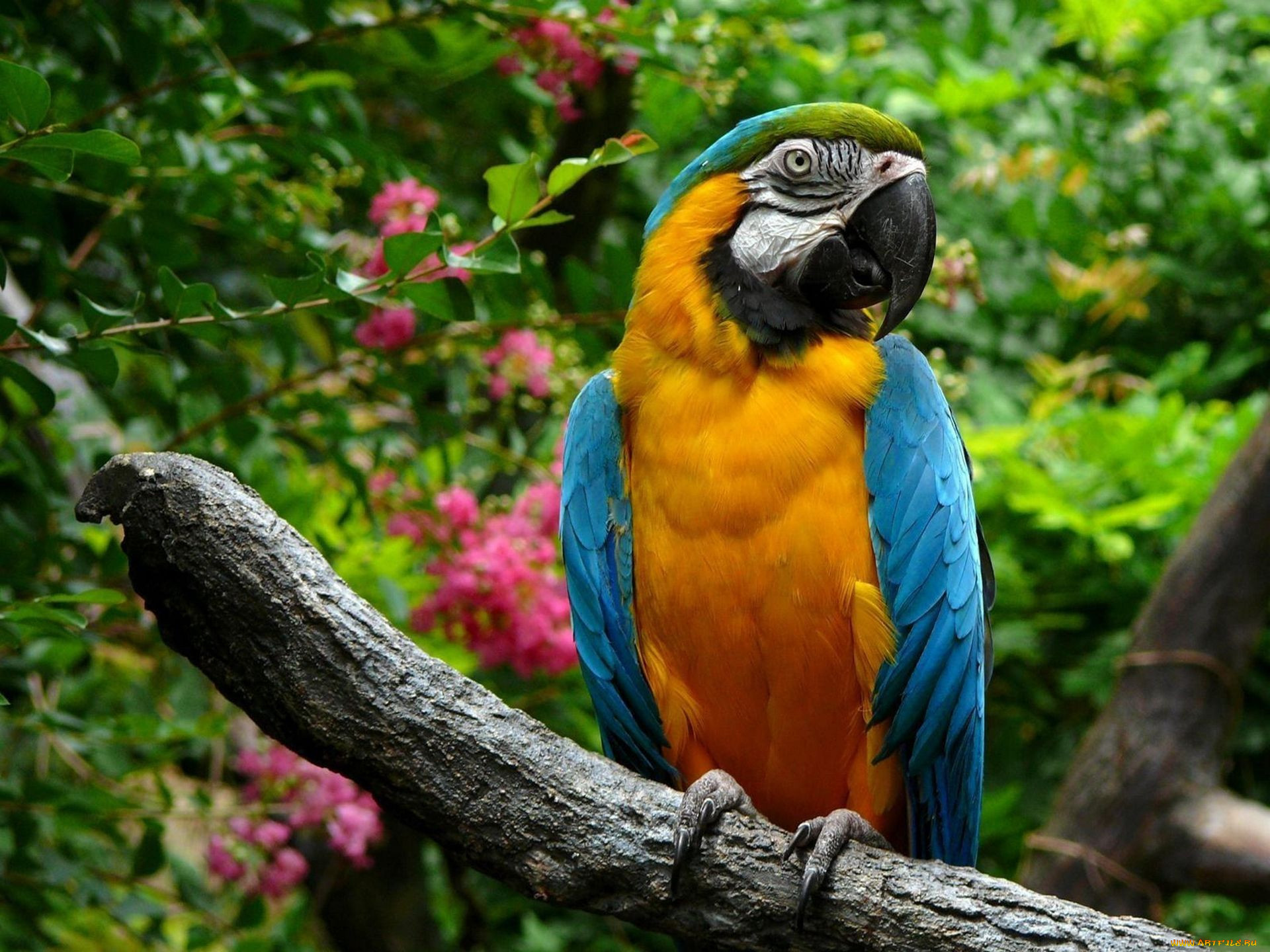 Картинка попугай питомец